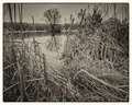 na Badínskom rybníku...