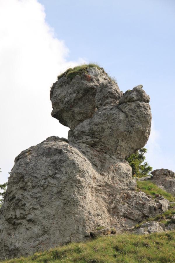 Kamenožrut