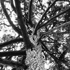 Proti stromom sme maličkí