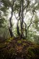 * V jesennom lese *