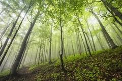* Fatranské lesy *