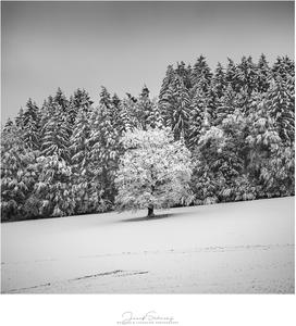 * V snehovej krajine *