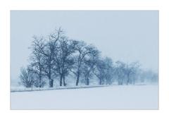Aľej v zime ll.
