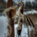 Zima pri jazere