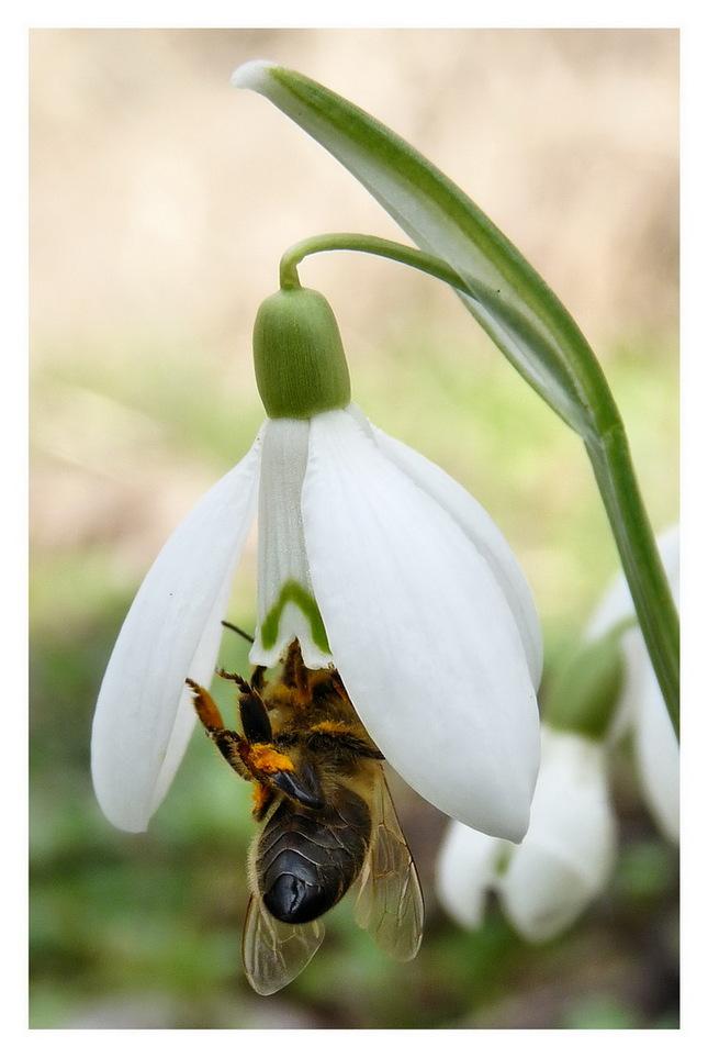 je tu jar!