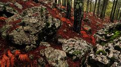 ...pine hill...