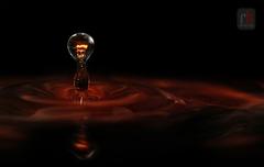 ...the bulb...