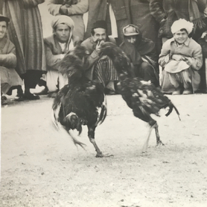 Afghanistan 1950-1960