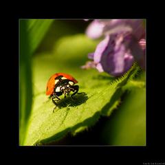 A bug-lady life
