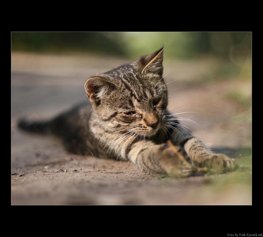 Mačička...
