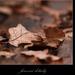 Jesenné detaily