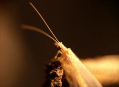 Prvé stretnutie s hmyzom :)
