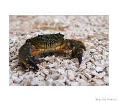 Krabík