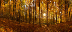 Jesenný les...