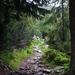 cesta na Krivan