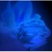 modrá duša