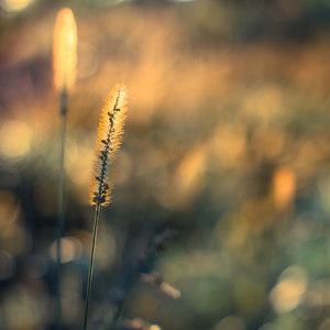 Na love v tráve