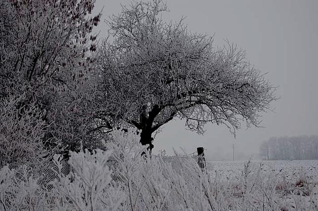 snehový strom