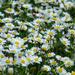 Kvetinkove more