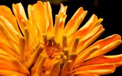 Pre včeličky