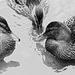Kačice klebetnice