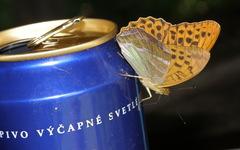 Slovenský motýľ