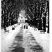 .:zimná prechádzka:.