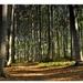 .:nalínkovaný les:.