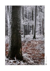 ...Frozen Guards_I...