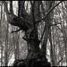 v tom lese straší