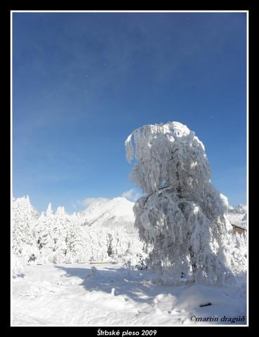 zmrznutá divočina