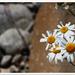 kvety leta
