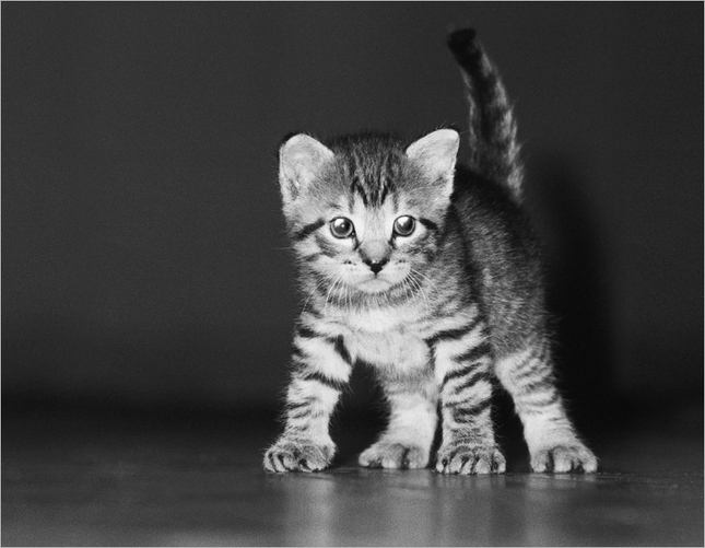 Naša mačka...