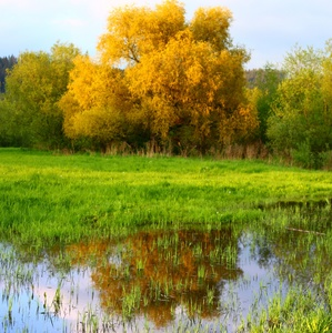 Príroda