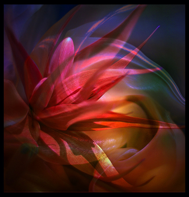 z ráje květin