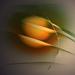 citronová harmonie....