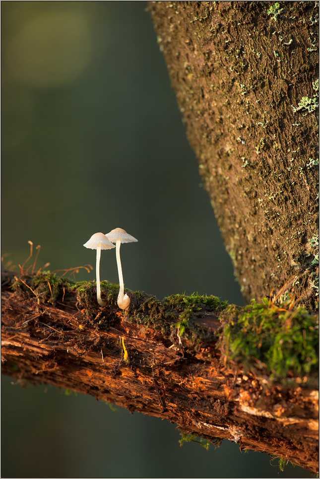 Lesný mikrosvet