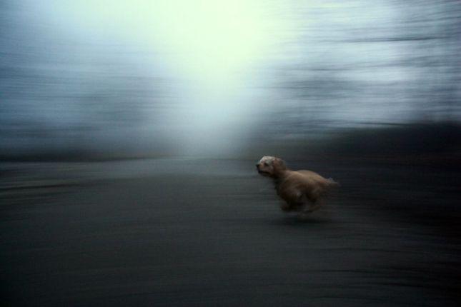 twilight dog