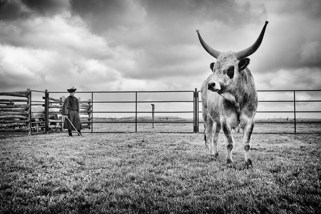 Pastier a býk