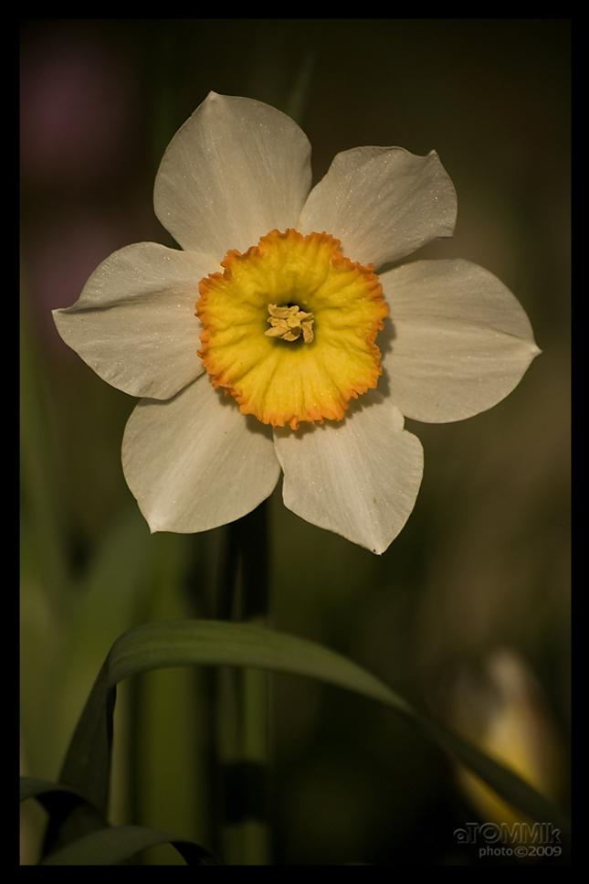 Žlto-biela :)
