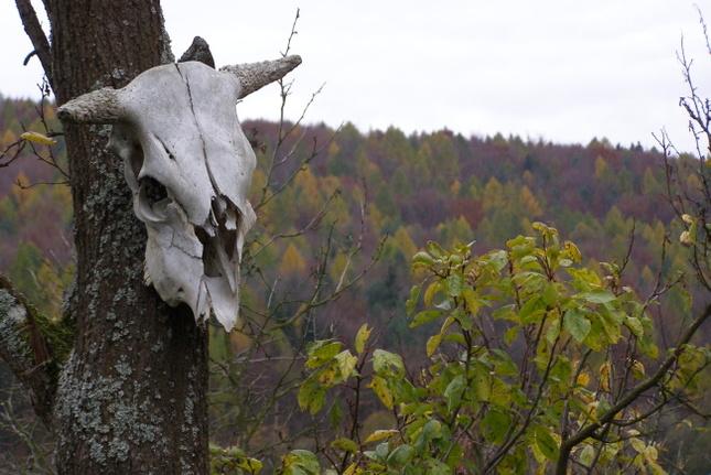Keď s jeseňou leto umiera....