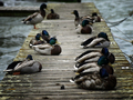 _pohoda pri jazere