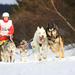 MS psích záprahoch Zuberec 2012