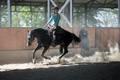 vysnený kôň