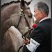 Momentka z výstavy koní.