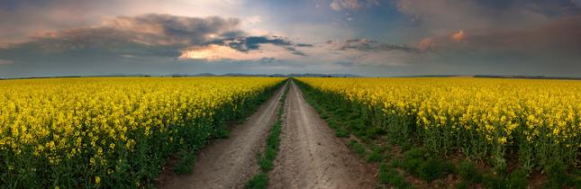 cestou medzi poliami