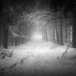 temným lesom bielych karpát