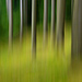 v karpatskom lese