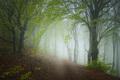 Tajomné lesy Slovenského krasu