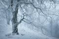 Zima na Vysokej II.